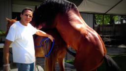 Конь трахает лошадь, зоо порно спаривание животных