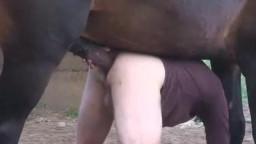 Животное трахает человека - гей зоо порно коня с мужиком